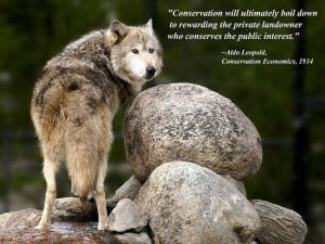 Gray Wolf Another Quote from Aldo Leopold