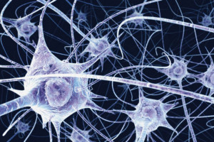 neurons could outlive the bodies that contain them by ed yong
