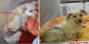 Bill Foundation: Heals a dog's broken back and broken spirit