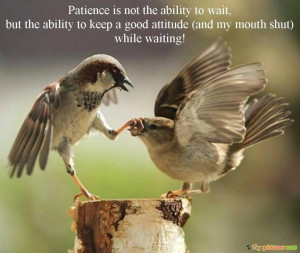quotes about funny good morning and the picture of the birds good