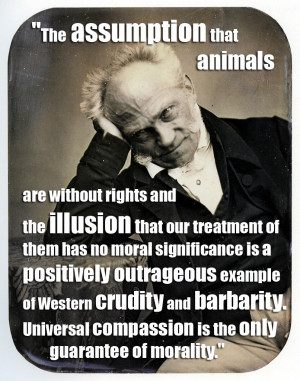 that animals are without rights and the illusion that our treatment ...