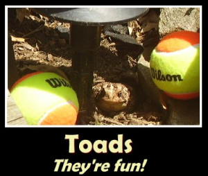 toad quotes