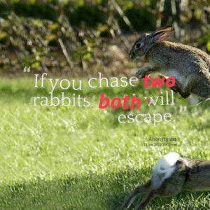 Quotes About: If you chase 2 rabbits