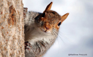 squirrel appreciation day 5 ways to go nuts wildlife promise