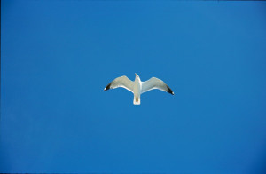jonathan livingston seagull quotes read sources inspirational quotes ...