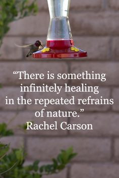 refrains of nature. -- Rachel Carson -- On image of Anna's hummingbird ...