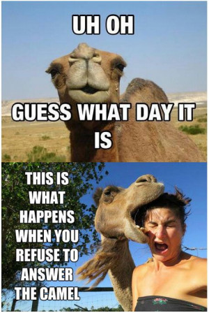 ... wednesday hump day hump day camel wednesday quotes happy wednesday