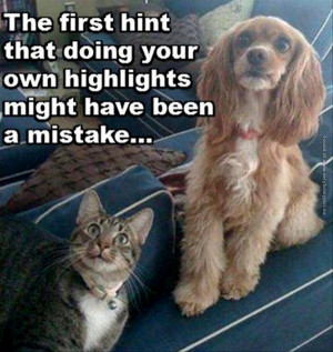 funny-pics-the-first-hint-highlights-was-a-mistake