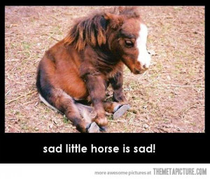 Funny photos funny sad horse cute