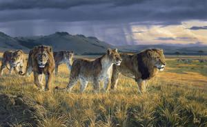 lions pride pic 1 lions pride pic 2 lions pride