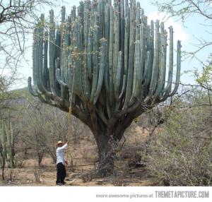 Funny photos funny cactus tree weird