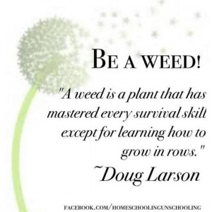 Images be a weed picture quotes image sayings