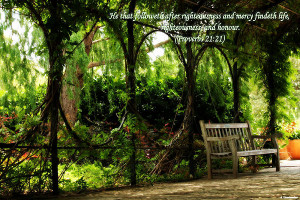 Tranquil Quotes Pictures