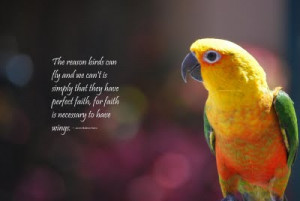 ... And We Can't Is Simply That They Have Perfect Faith ~ Birds Quote