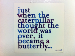 Lovely Butterfly Thought for the Day