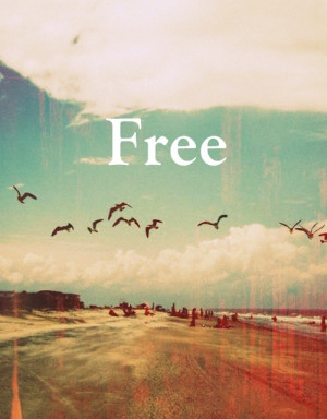 bird, clouds, fly, fly away, free, life, nature, photography, phrase ...