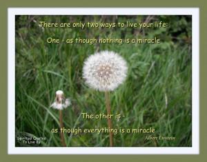 Quote from Albert Einstein on photo of dandelion seed head