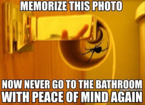 jokes funny spider rage ics