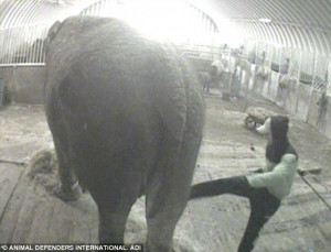 Circus boss and his wife are charged with animal cruelty after secret ...