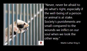 quote for shelter animals