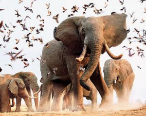 Elephants have long been observed to follow the same travel routes ...
