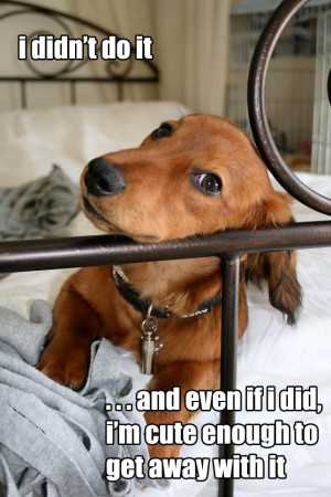 cute dog quotes log in