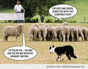 conspiracy sheep dog farmer herding animals working together funny ...