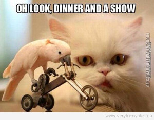 Funny Picture - Dinner and a show
