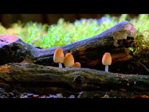 Preview for documentary about mycology and the work of Paul Stamets.