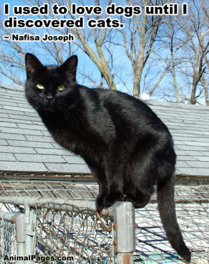 nafisa joseph quotes i used to love dogs until i discovered cats ...