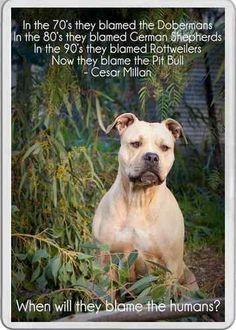... pet, pit bulls, dog whisperer, puppi, cesar millan, quot, dog breeds