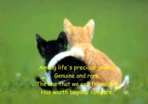 Friendship ~ Kittens