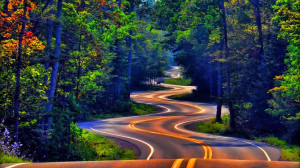 Forest Road Tree Photography 1920x1080