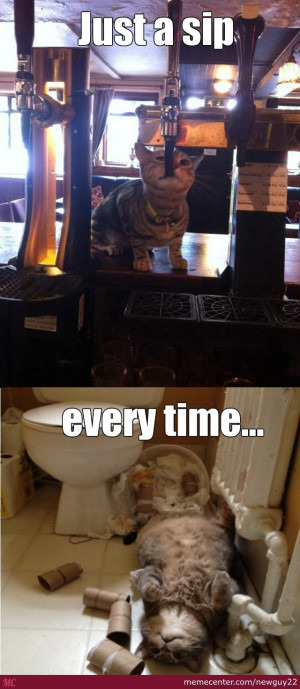 Drunk Cat Is Drunk