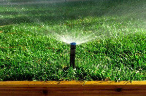 Growing A Vegetable Garden Quotes Watering Garden After Planting