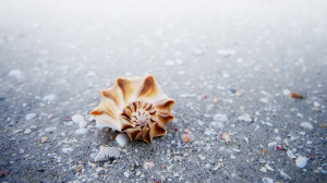 The Seashell of Inspiration – © Copyright 2012 by William Beem