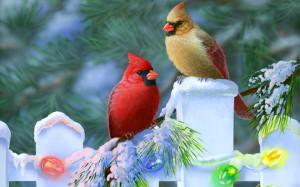 Free Bird Wallpaper Download
