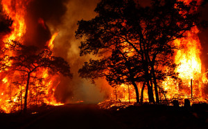 forest-fire_04-PS.jpg