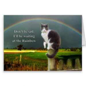 Sympathy - Loss of Pet Cat Greeting Cards