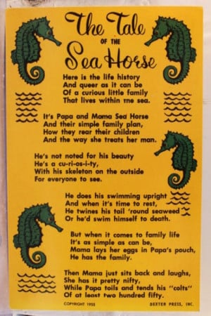 Celebration of the Seahorse in Poems - The Tale of the Sea Horses