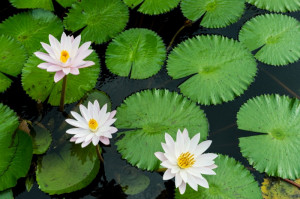 Underwater Sea Plants Names