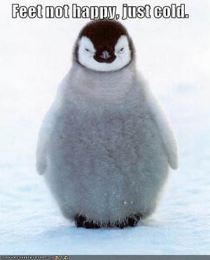 funny-pictures-penguin-does-not-have-happy-feet-but-rather-cold-ones ...