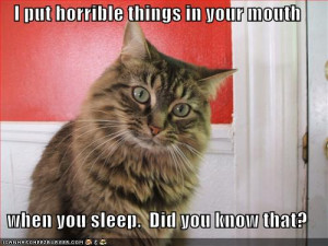 Funny Cats With Funny Quotes Clipartandpicture.blog...funny