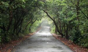 The Entrepreneur Path To Success