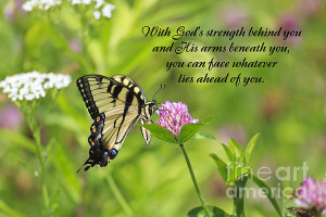 Butterfly With Religious Quote Print by Jill Lang