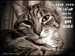 Cute Cat Quotes Cat quote of the week - catnip