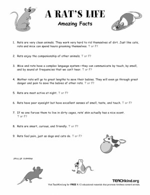 """Love this lesson? Check out """"An Elephant's Life"""" to teach your"""
