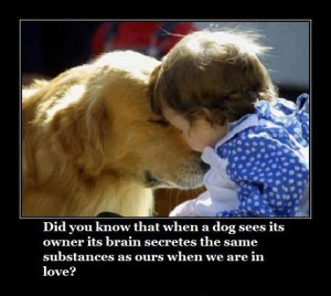 dog and human love