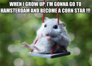 funny hamster on a swing funny hamster on a swing