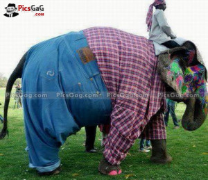 ... shemailphotos elephant clothes poem in elephant funny funny elephant
